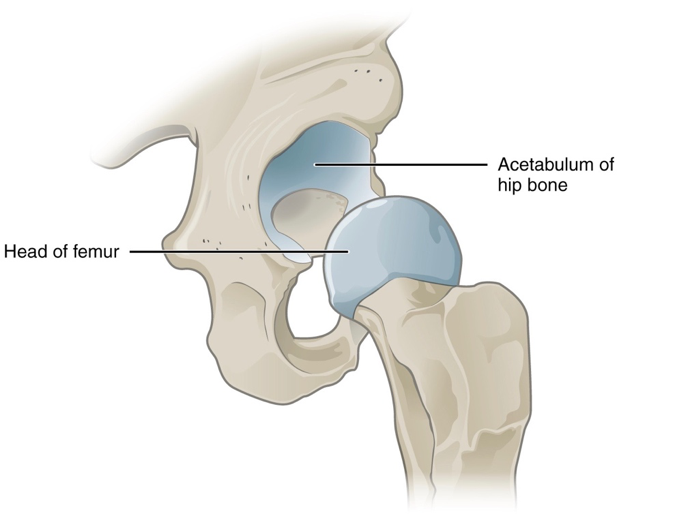 Hip Labrum Tears Causes Symptoms And Treatments Total